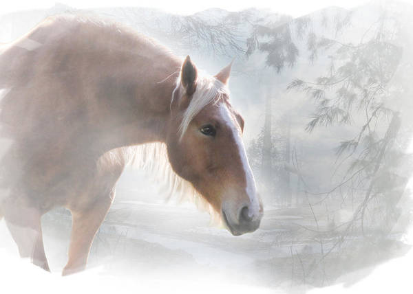Palomino Photograph - Pretty Horse And Snow by Stephanie Laird