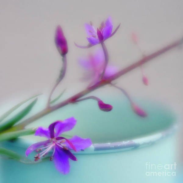 Fireweed Photograph - Pretty In Pastel 2 by Priska Wettstein