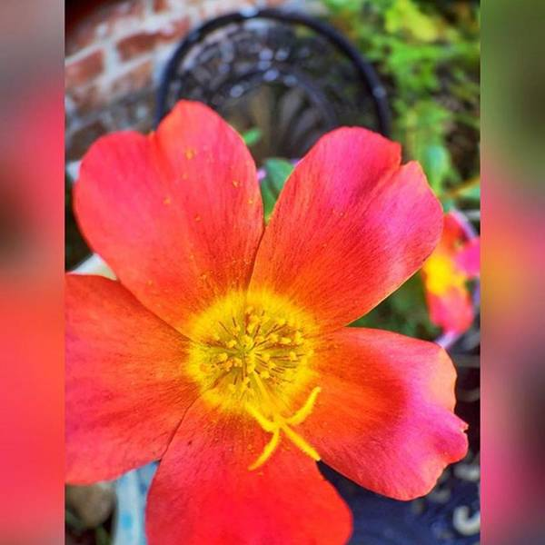Macro Photograph - Pretty In Pink #inmygarden #macros by Joan McCool