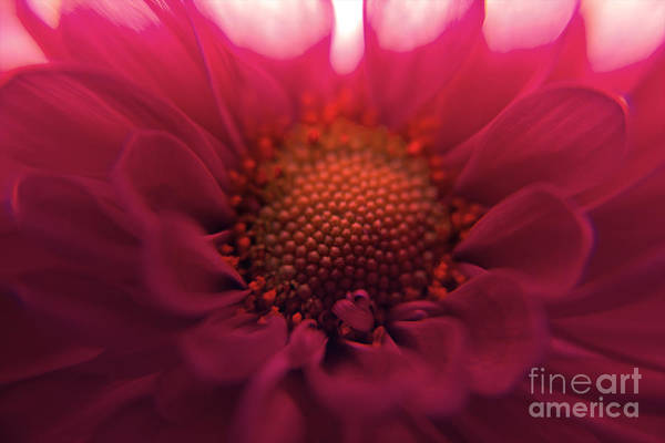 Photograph - Pretty In Pink by Kelly Holm