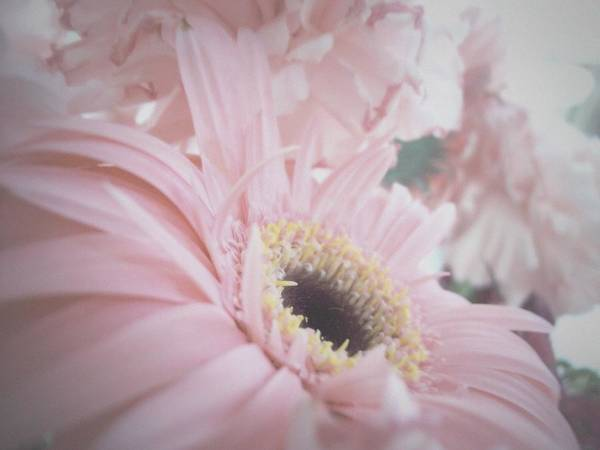 Photograph - Pretty In Pink by Mary Wolf