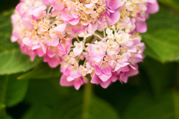 Photograph - Pretty In Pink by Parker Cunningham