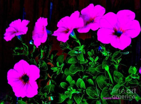 Wall Art - Photograph - Pretty In Pink Petunias by Marsha Heiken