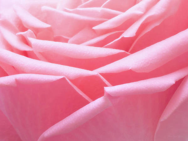 Wall Art - Photograph - Pretty In Pink by Wim Lanclus