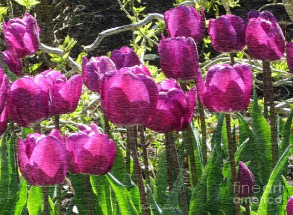 Photograph - Pretty In Purple by Kathie Chicoine