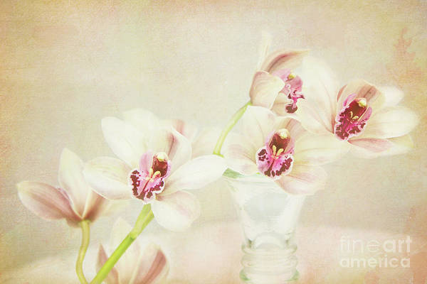 Photograph - Pretty Orchids by Kim Andelkovic