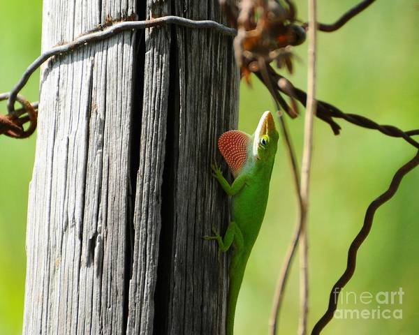 Green Anole Photograph - Pretty Penny 3 by Al Powell Photography USA