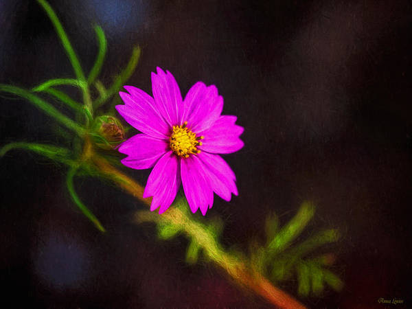 Photograph - Pretty Pink Flower by Anna Louise