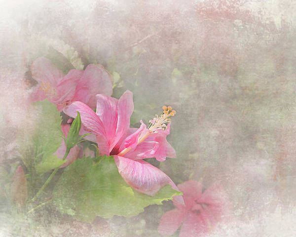 Digital Art - Pretty Pink Hibiscus by Michele A Loftus