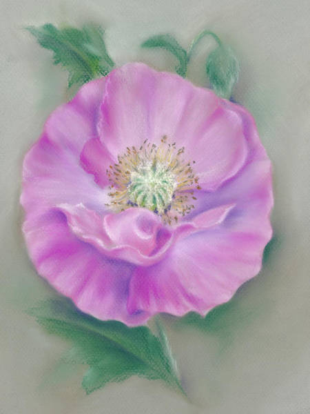Pastel - Pretty Pink Poppy by MM Anderson