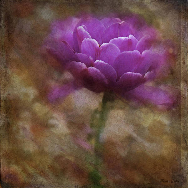 Photograph - Pretty Pink Tulip by Anna Louise