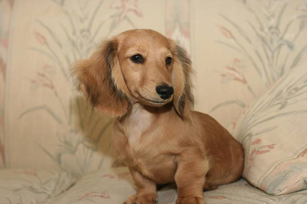 Photograph - Pretty Pup by Ree Reid