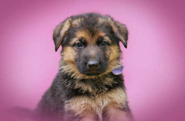 Photograph - Pretty Puppy In Pink by Sandy Keeton