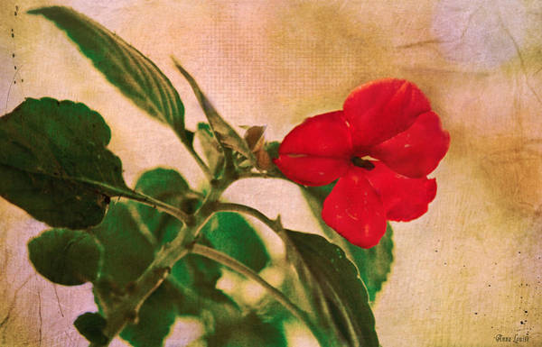 Photograph - Pretty Red Flower by Anna Louise