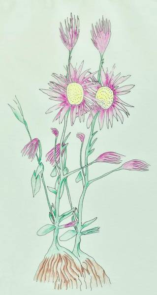 Weeds Drawing - Pretty Weed by Ava Shelton