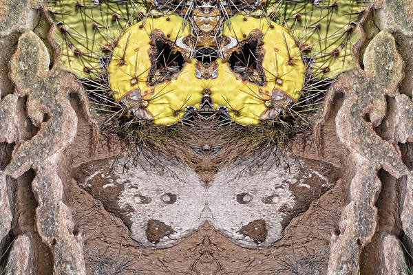 Digital Art - Prickly Bear by Becky Titus