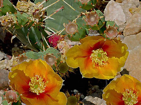 Photograph - Prickly Pear Aglow by Lynda Lehmann