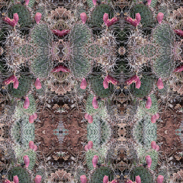 Digital Art - Prickly Pear Cactus Kaliedoscope Views by Julia L Wright