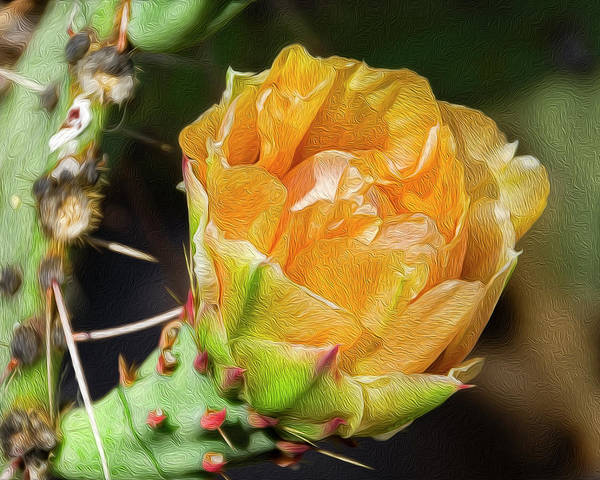 Photograph - Prickly Pear Flower Op23 by Mark Myhaver