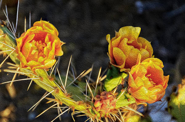 Photograph - Prickly Pear Flowers Op49 by Mark Myhaver