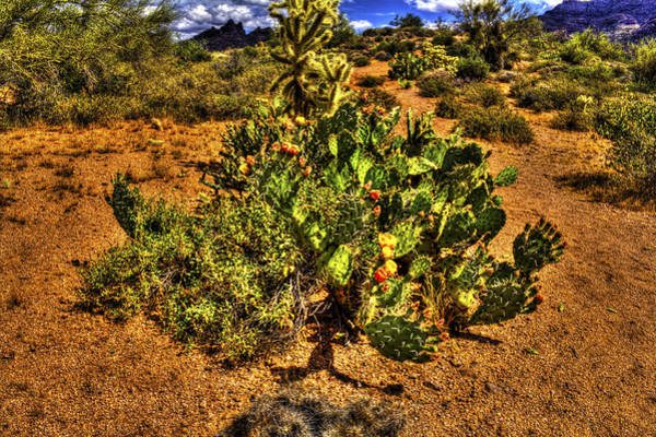 Prickly Pear In Bloom With Brittlebush And Cholla For Company Art Print