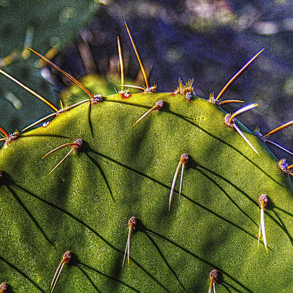 Photograph - Prickly Pear Study No. 9 by Roger Passman