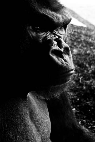 Wall Art - Photograph - Primate Loneliness   by Joshua Ball