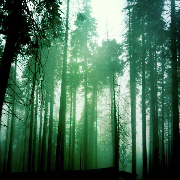 Photograph - Primeval Forest by Brian Kirchner