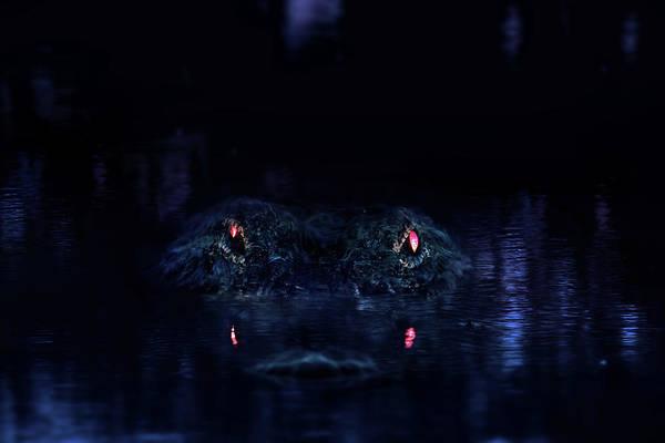 Gator Photograph - Primeval by Mark Andrew Thomas