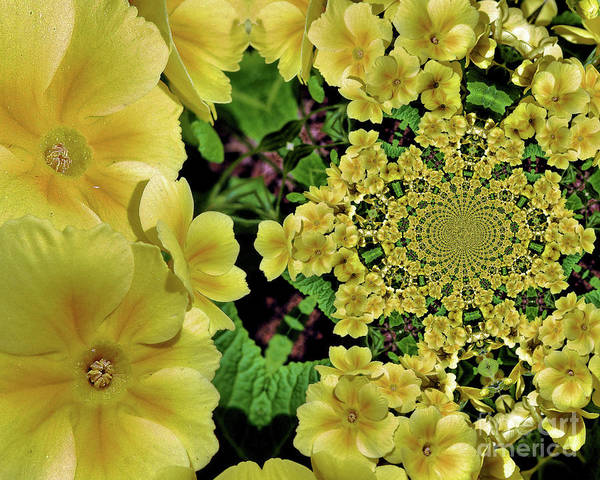 Photograph - Primrose Flowers Abstract by Smilin Eyes  Treasures