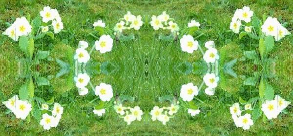 Photograph - Primrose Pattern by Julia Woodman