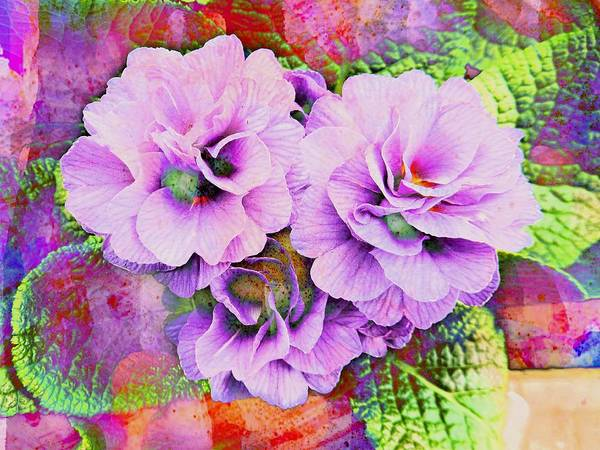 Photograph - Primula Lilac Fantasy by Dorothy Berry-Lound