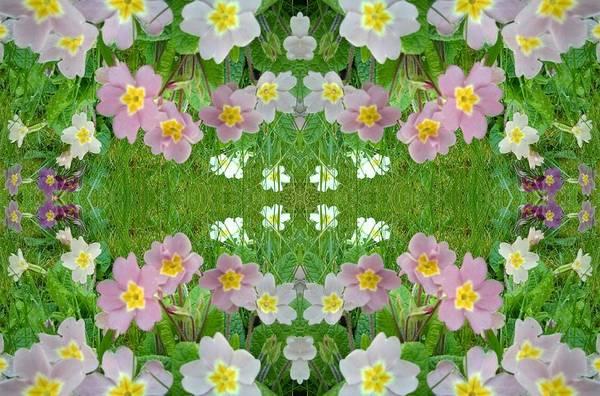 Photograph - Primula Pattern 1 by Julia Woodman