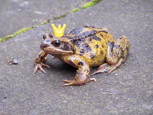 Golden Princess Photograph - Princess Frog by Elena Perelman