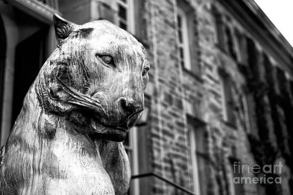Wall Art - Photograph - Princeton Tiger Portrait by John Rizzuto