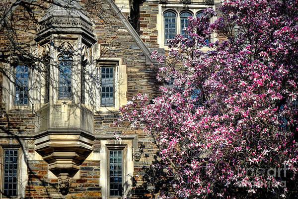 Photograph - Princeton University Memories by Olivier Le Queinec