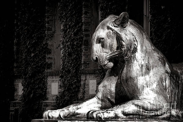 Photograph - Princeton University Mighty Tiger  by Olivier Le Queinec
