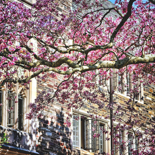 Photograph - Princeton University Springtime Celebration  by Olivier Le Queinec