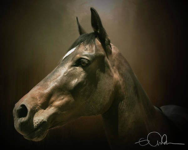 Digital Art - Profile Of A Horse by Gloria Anderson