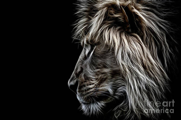 Photograph - Profile Of A King by Brad Allen Fine Art