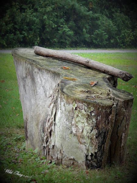 Photograph - Progressive Stump Says . . .  by Wild Thing