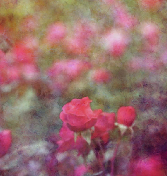 Photograph - Prolific Impression 9033 Idp_2 by Steven Ward