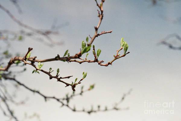 Photograph - Promise by Ana V Ramirez