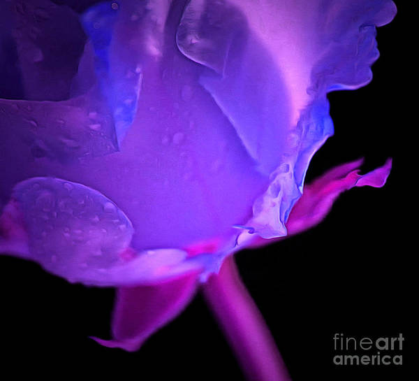 Rose Bud Photograph - Promises by Krissy Katsimbras