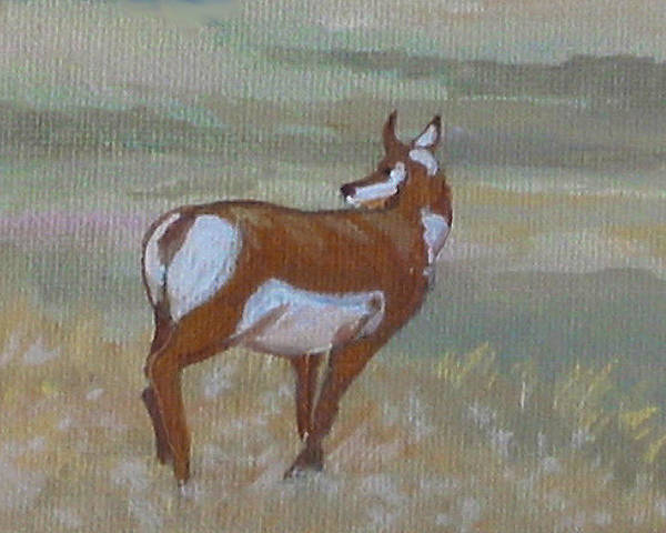 Painting - Prong Horned Antelope by Diane Ellingham