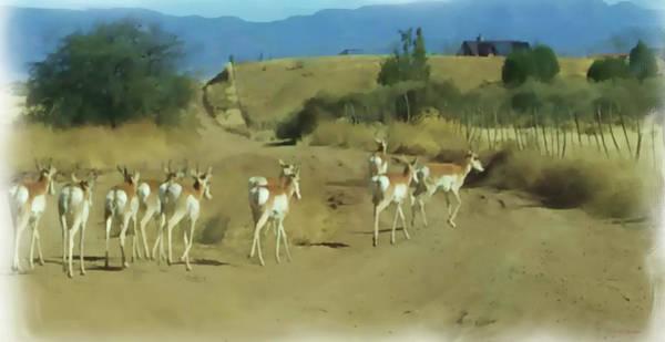 Painting - Pronghorn Antelope Herd Arizona - Painted by Ericamaxine Price
