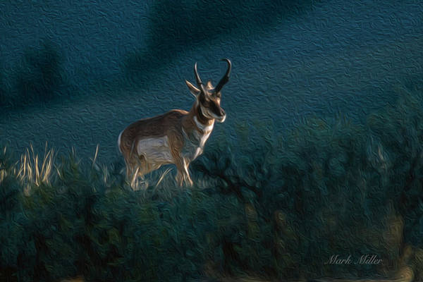 Photograph - Pronghorn Buck In Dramatic Light by Mark Miller