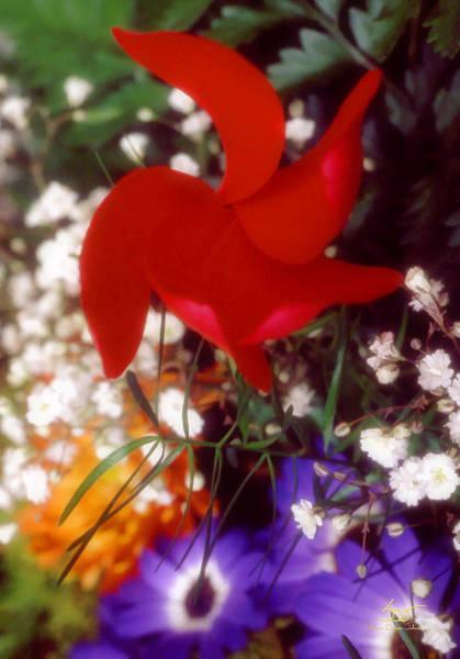 Photograph - Propeller Plant by Sam Davis Johnson