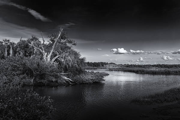 Pine Grove Photograph - Protected Wetland by Marvin Spates