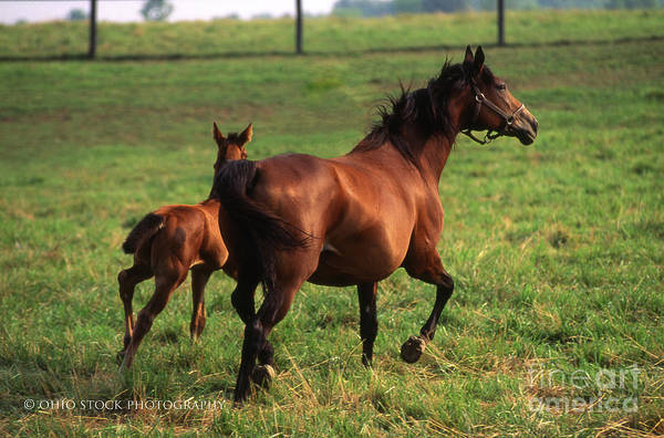 2f205 Protective Mare And Foal Art Print